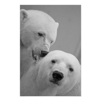 Cute polar bear couple poster