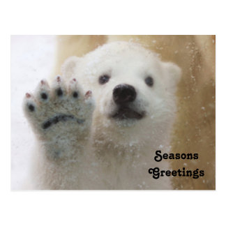 Cute Polar Bear Cub Waving Postcard