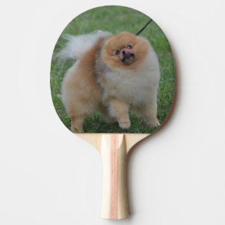 Cute Pomeranian Ping-Pong Paddle