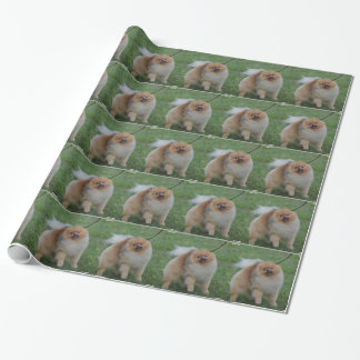 Cute Pomeranian Wrapping Paper