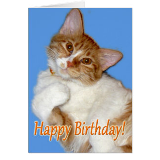 Cute Posing Cat - Birthday General Card