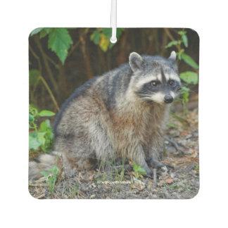 Cute Posing North American Raccoon Car Air Freshener