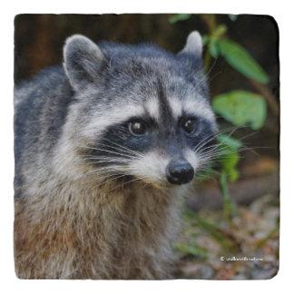 Cute Posing North American Raccoon Trivet