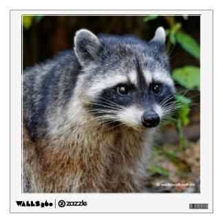 Cute Posing North American Raccoon Wall Decal