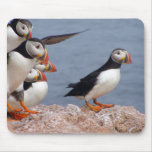 Cute Puffins Mousepad