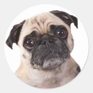 cute pug dog round sticker
