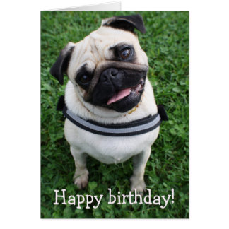 Cute Pug Happy Birthday Greeting Card