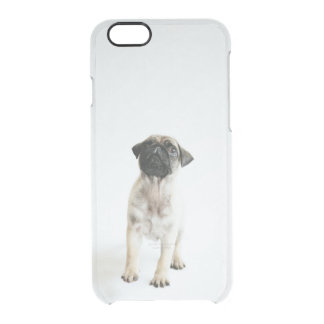 Cute Pug Puppy Clear iPhone 6/6S Case