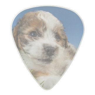 Cute puppy dog (Shitzu) Acetal Guitar Pick