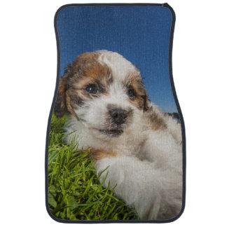 Cute puppy dog (Shitzu) Car Floor Carpet