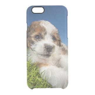 Cute puppy dog (Shitzu) Clear iPhone 6/6S Case