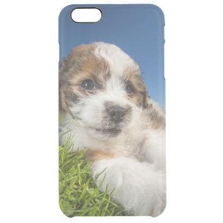 Cute puppy dog (Shitzu) Clear iPhone 6 Plus Case