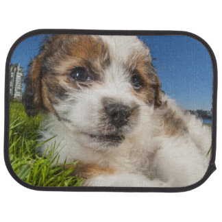 Cute puppy dog (Shitzu) Floor Mat