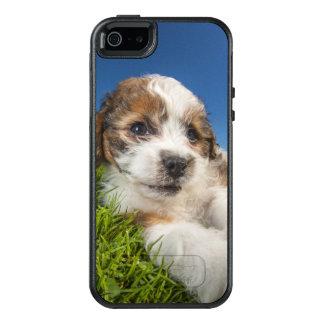 Cute puppy dog (Shitzu) OtterBox iPhone 5/5s/SE Case
