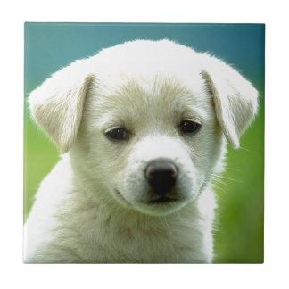 cute-puppy-dog-wallpapers.jpg ceramic tiles