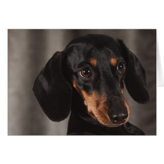 Cute Puppy Eye Dachshund Dog Card
