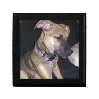 Cute Puppy Gift Box