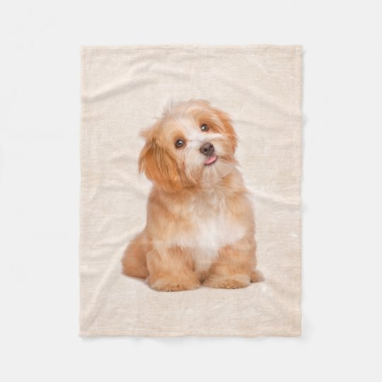 Cute Puppy Havanese Puppy Fleece Blanket