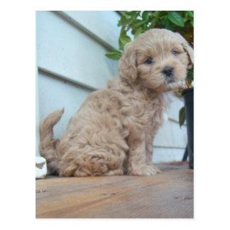 Cute Puppy Postcard