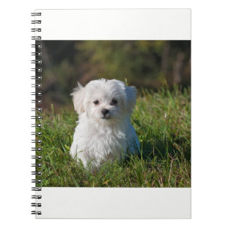 Cute Puppy Poster - BrandinUSA Spiral Notebook
