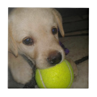Cute Puppy With Ball Ceramic Tile