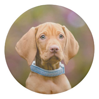 Cute puppyeyed Hungarian Vizsla Dog Puppy Photo ; Eraser