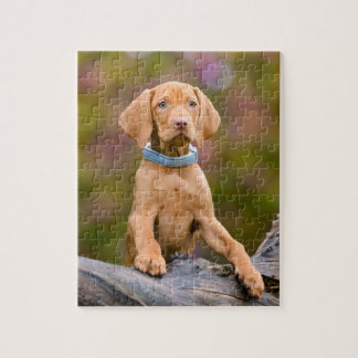 Cute puppyeyed Hungarian Vizsla Dog Puppy Photo - Jigsaw Puzzle