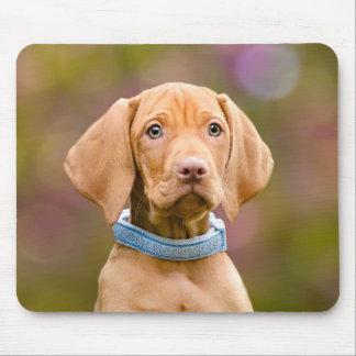 Cute puppyeyed Hungarian Vizsla Dog Puppy Photo : Mouse Pad