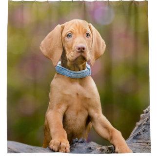 Cute puppyeyed Hungarian Vizsla Dog Puppy - Tub