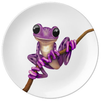 Cute Purple Tree Frog on a Branch on White Porcelain Plates
