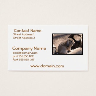 Cute Rabbit Business Card