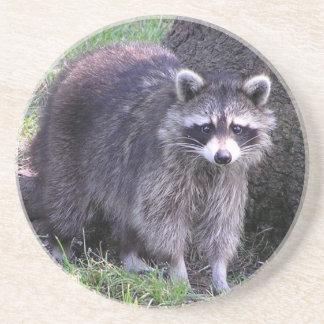 Cute Raccoon Coaster