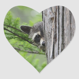 Cute Raccoon Heart Sticker