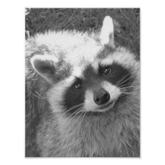 Cute Raccoon Poster