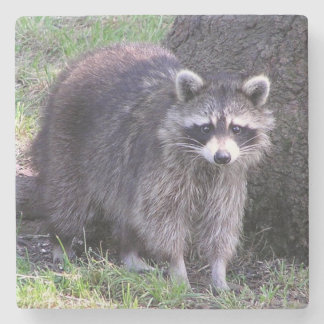 Cute Raccoon Stone Coaster