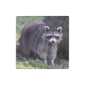 Cute Raccoon Stone Magnets