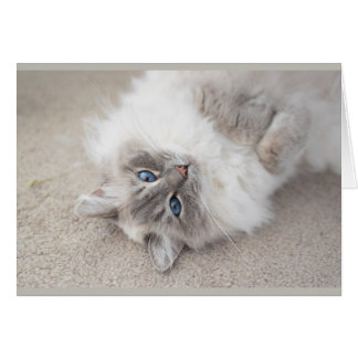 Cute Ragdoll cat Card
