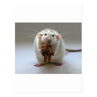 Cute Rat Holding teddy Post Cards
