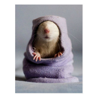 cute rat peek a boo postcard