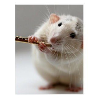 Cute rat playing flute postcard