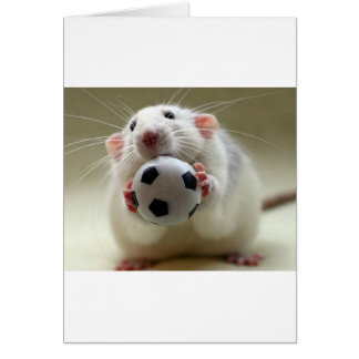 Cute rat playing soccer card