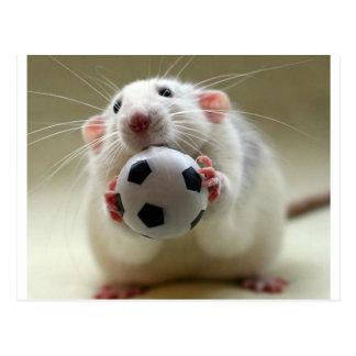 Cute rat playing soccer postcard