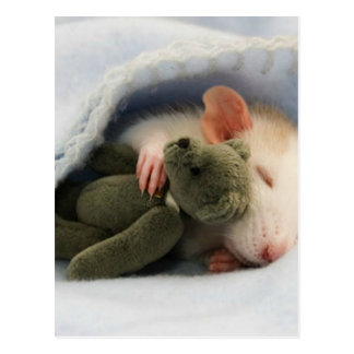 cute rat sleeping with teddy postcard