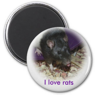 Cute rat sticking out his tongue magnet