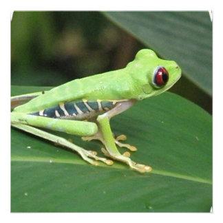 Cute Red Eyed Tree Frog Custom Invites
