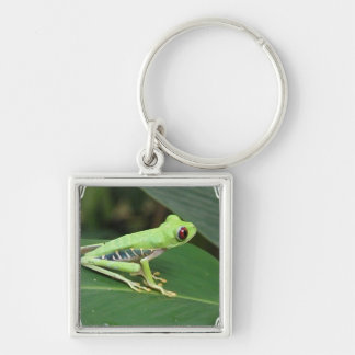 Cute Red Eyed Tree Frog Keychain