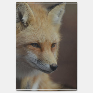 Cute Red Fox Post-it Notes