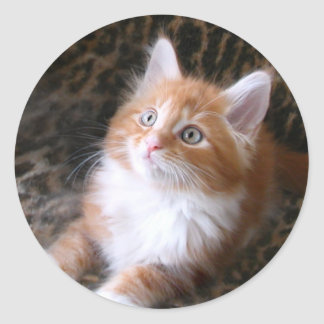 Cute red kitten stickers