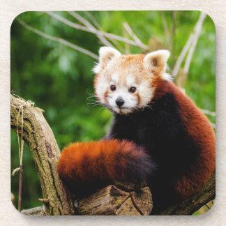 Cute Red Panda Bear Coaster