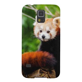 Cute Red Panda Bear Galaxy S5 Cases